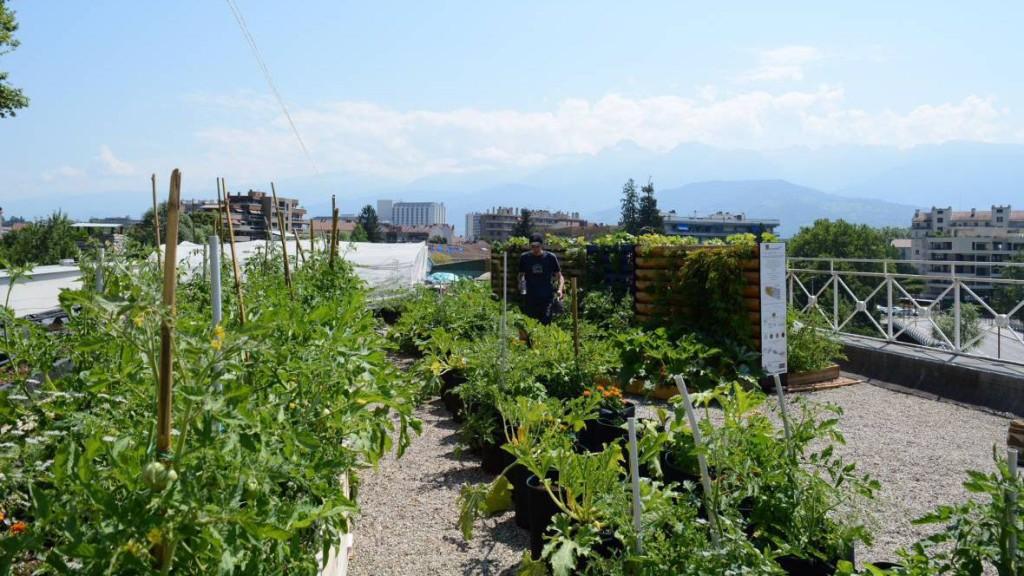 Cultivons nos toits à Grenoble