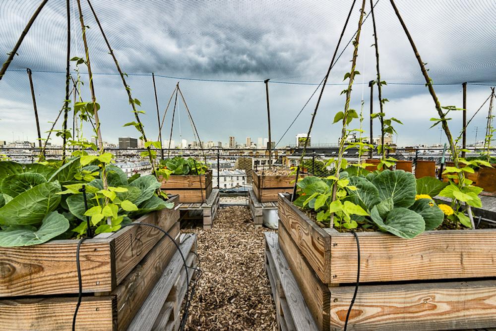 Le jardin potager sur le toit d'Agroparis Tech