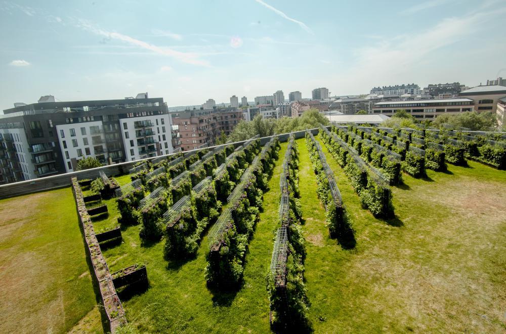 Une micro-ferme urbaine Peas&Love a été installé au printemps 2017 sur le toit du magasin Caméléon, à Woluwe-Saint-Lambert en Belgique