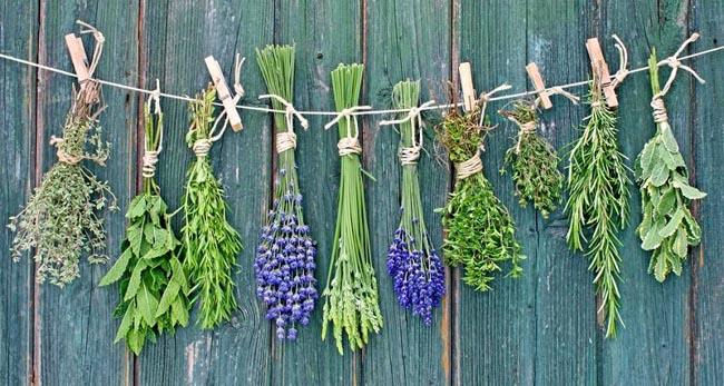 medicinal-plants-you-can-grow