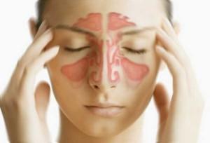 Les sinus