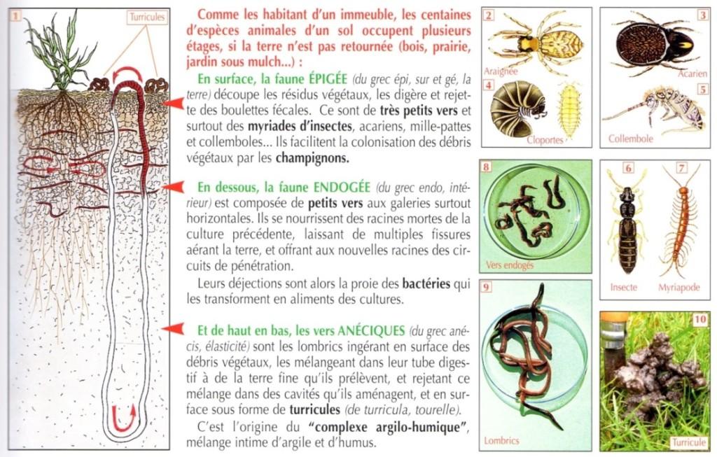 Guide du nouveau jardinage de Dominique Soltener