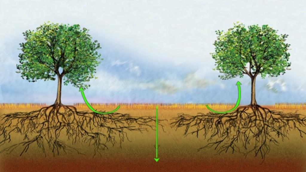 Les boucles vertueuses d'un système agroforestier : régulation du carbone et de l'azote