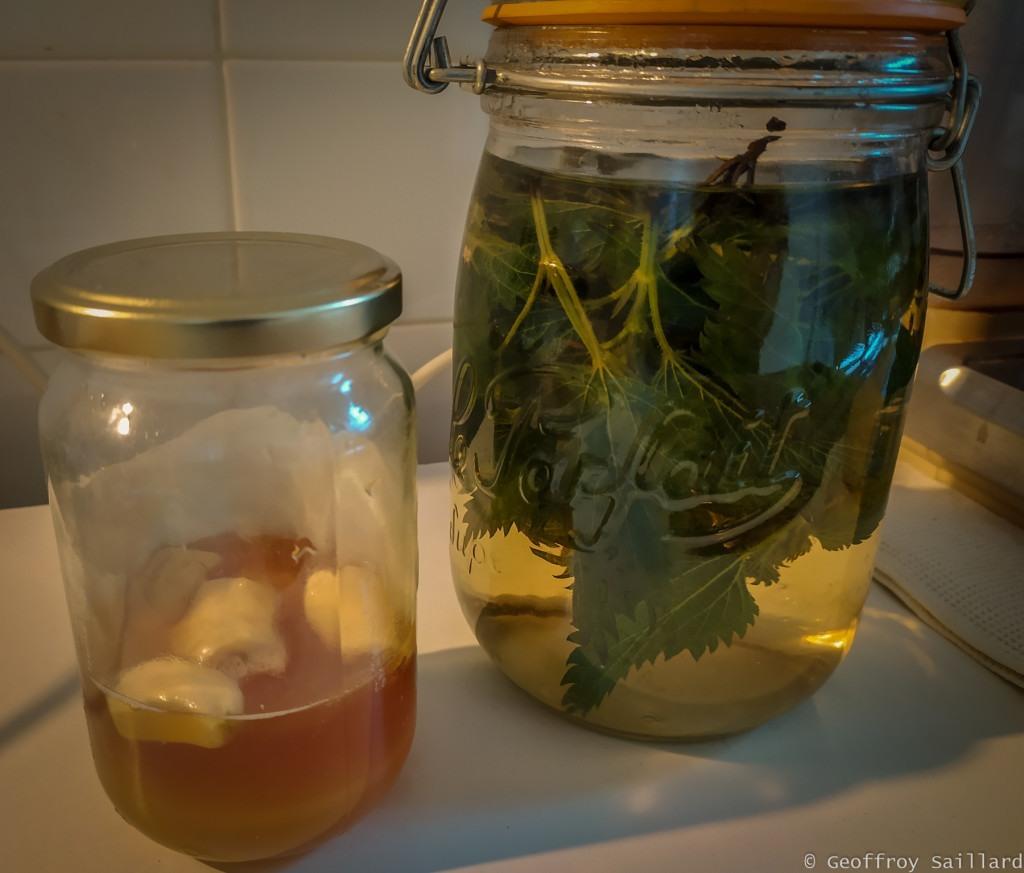 Macérat de miel d'Ail et infusion/macération ortie