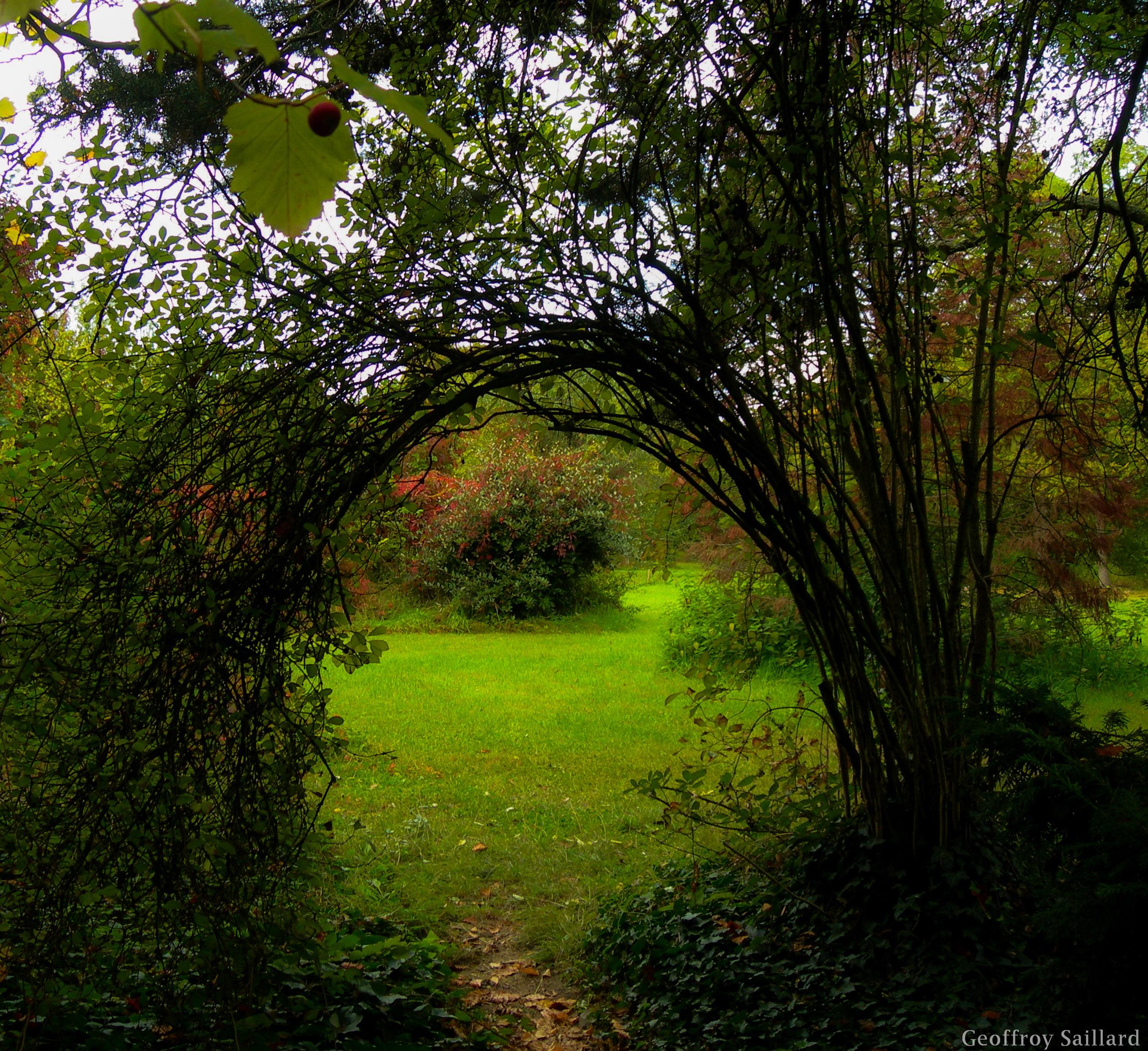 Un passage dans un Arboretum à Verrières le Buisson