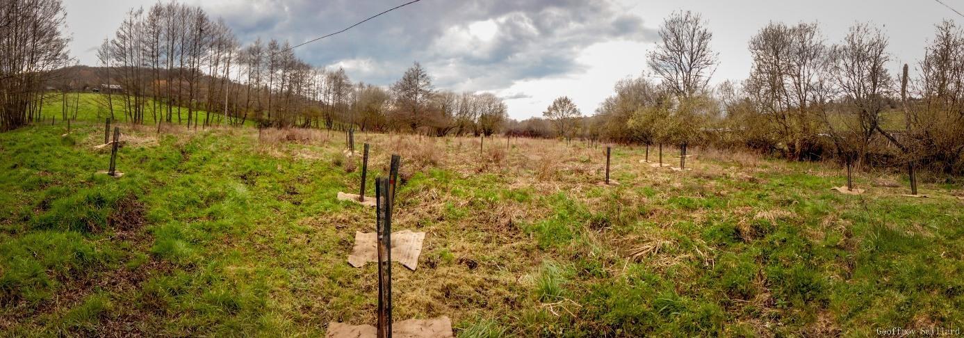 CVert_agro-normandie_2016-pano-plantations