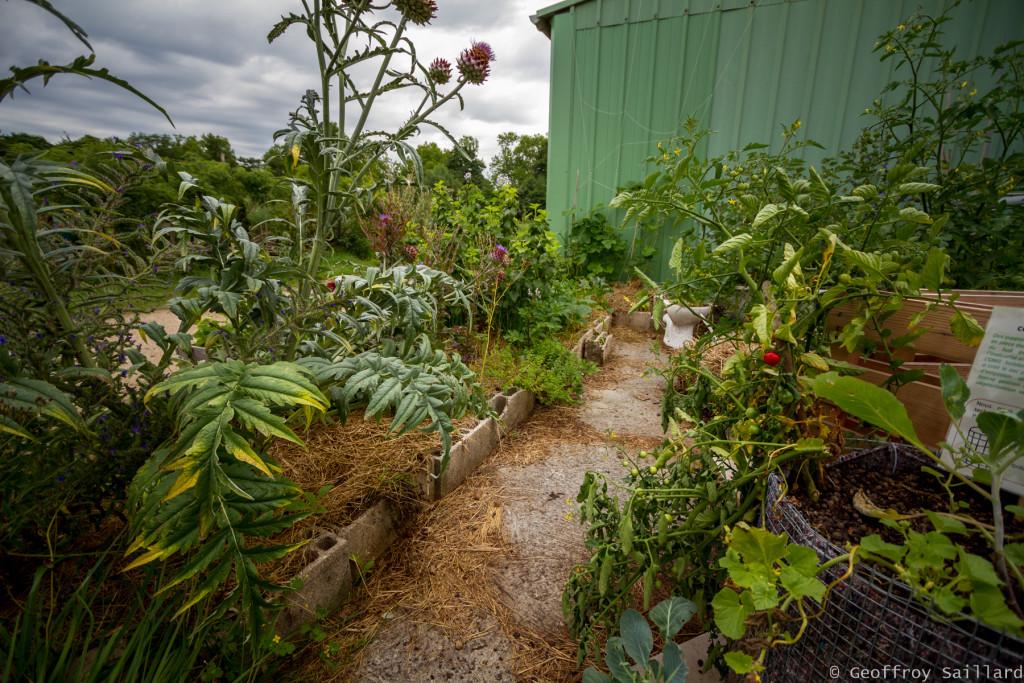 """L'espace """"agriculture urbaine"""" à la ferme de Paris, avec un impressionnant artichaut au premier plan."""