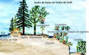 Aménagement d'un jardin forestier pour des baies. Pour 2 personnes sur l'année, il compte 4 baies de mai, 4 grosseillers, 2 cassissiers, 2 casseilles, 3 kiwi, 10 framboisiers, 2 ronces, 2 baies de gojis et 30 fraisiers ©Kurt-Foster
