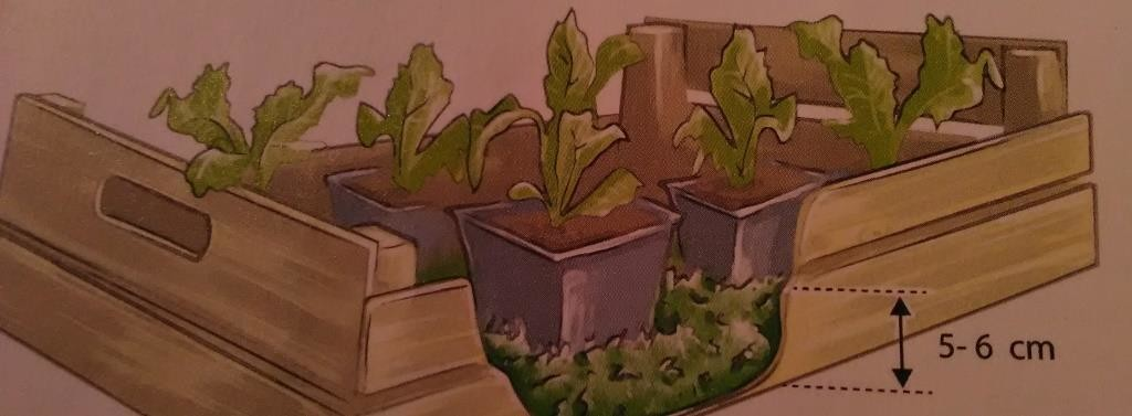 Illustration jardin-centre terre vivante
