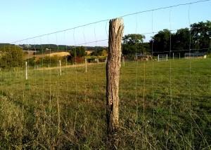 Tuteur d'acacia pour clôture