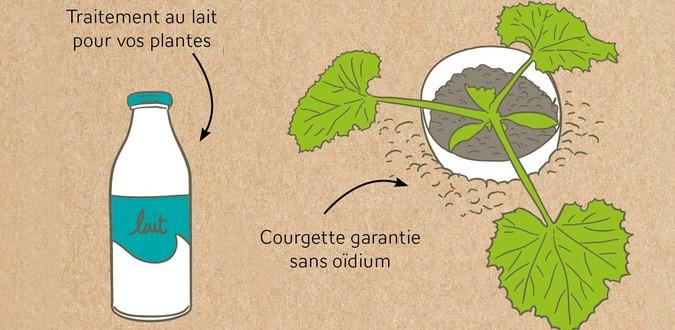 Du lait pour mes courgettes propose plus de 130 astuces de jardinage de Dan Marshall, au éditions Larousse.