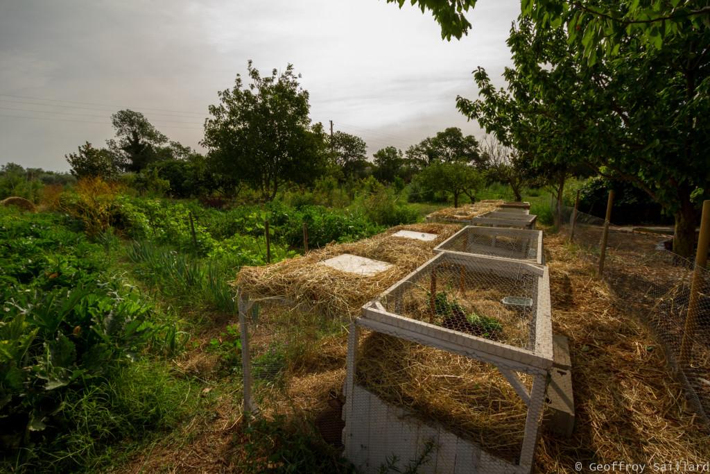 La nurserie pour un éventuel lâché de canard