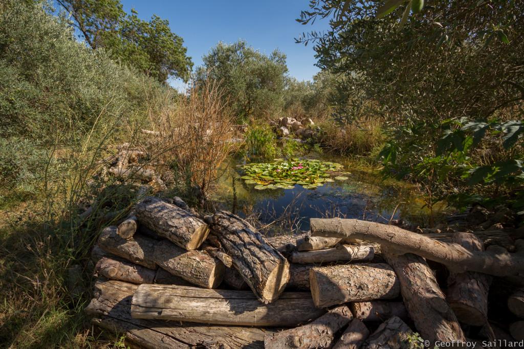 Une mare réserve - partie oliveraie