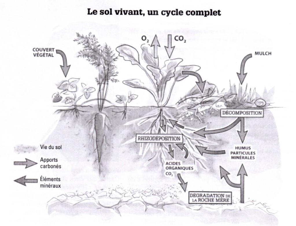 Le sol vivant: le cycle complet