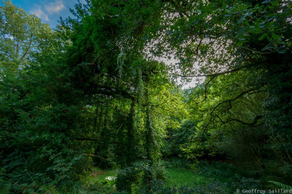 Nature-multi-étagé_Bretagne-été-2017