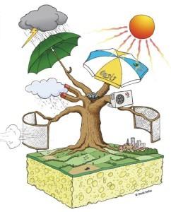 Arbres et climat, le champ des possibles, ©AP32