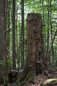 Chandelle couverte de champignons.