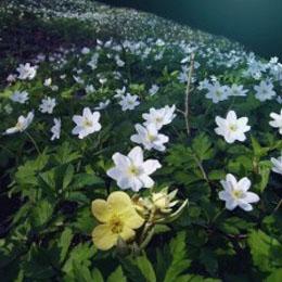 Entretenir le jardin avec la lune contemplavert for Entretenir jardin