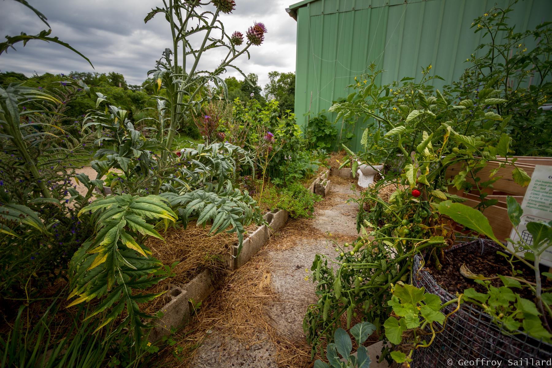 Pot De Fleur Avec Des Pneus mini-jardins et cultures hors-sol/comestible : une bonne
